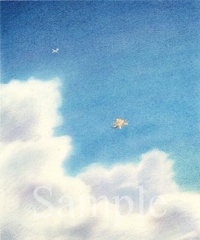 Sky Diving エゾモモンガの挑戦 イラスト 色鉛筆 下北沢イラスト