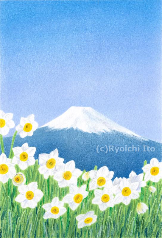 富士と水仙《色鉛筆》 (22cm×15cm)