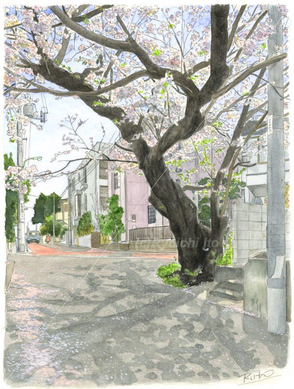 オリジナル新作「桜の老木」